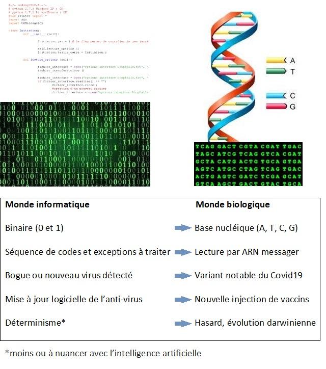 Comparaison entre le monde informatique et celui de la biologie